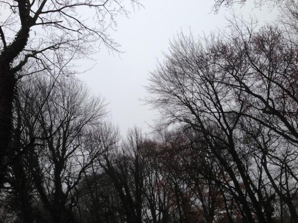 December morning.